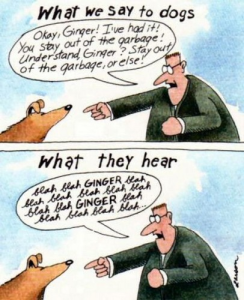 Far Side Ginger